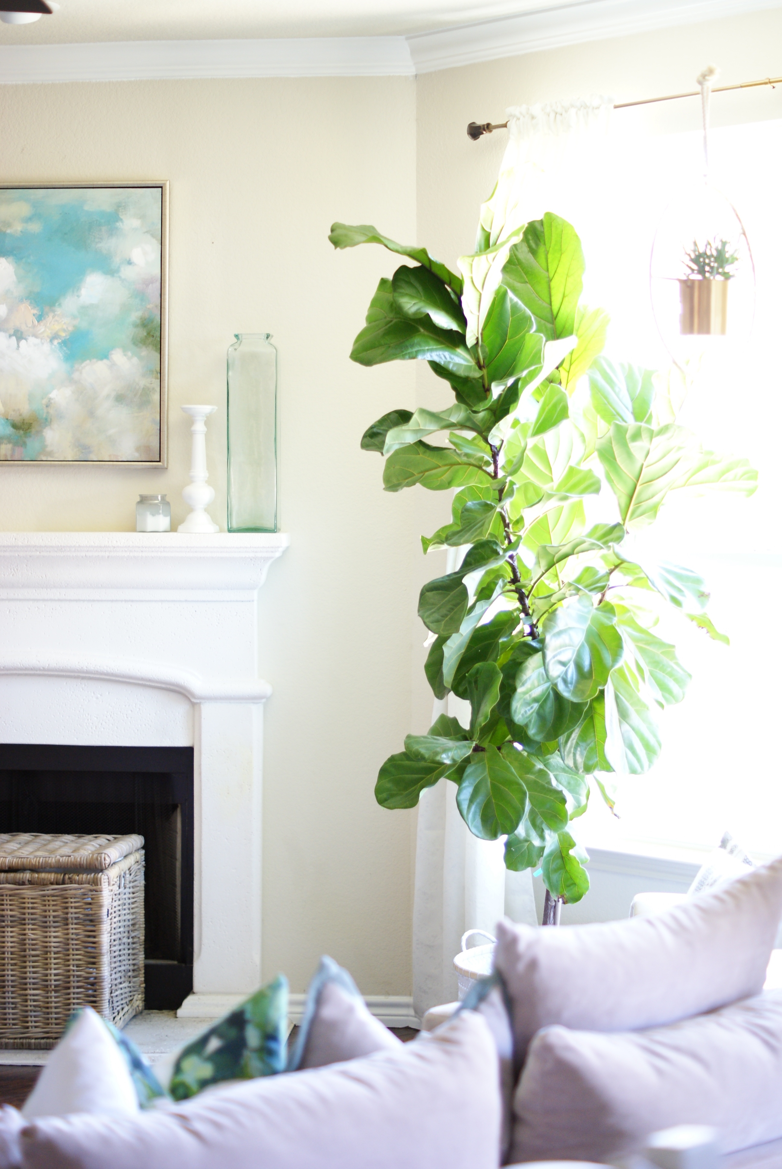 friday favorites faux fiddle leaf figs